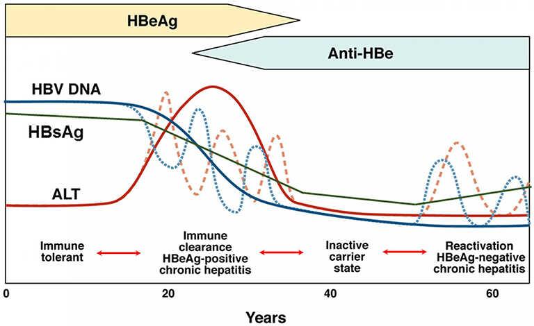 biểu đồ định lượng virus viêm gan B
