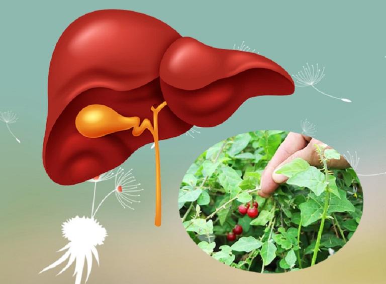 05 Mẹo chữa viêm gan B mãn tính bằng cây thuốc nam quanh nhà